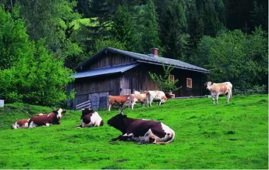 做到休闲农业高效运营,如何推陈出新?