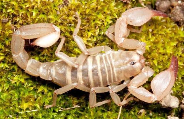 蝎子养殖成本和利润