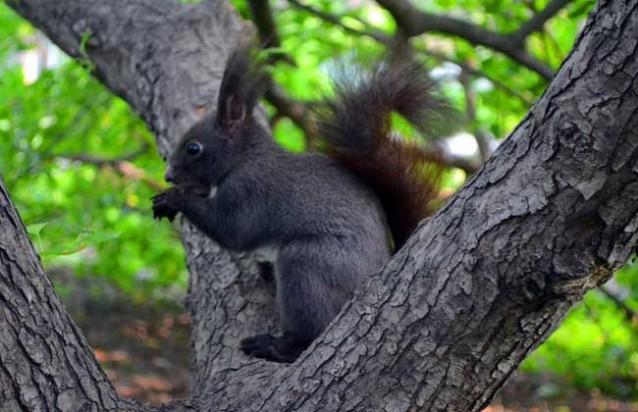 农庄研学:关于松鼠的资料有哪些?