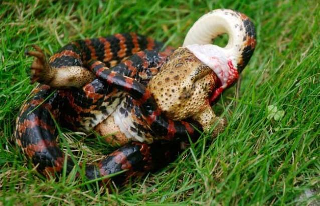 蛇类养殖有哪些?