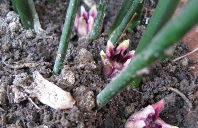 20160706101407463 生物研学知识:一叶兰会开花吗?