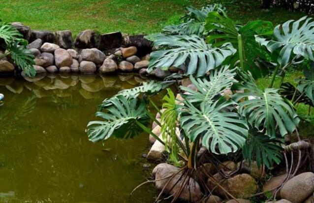 龟背竹能吸收甲醛吗?