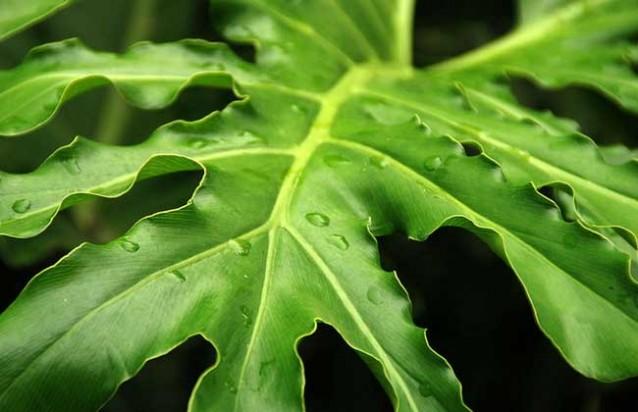 龟背竹有毒吗?
