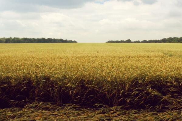 2018农村田亩补贴是按户口人数补贴吗?政策还有吗?多少钱一亩?